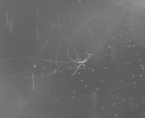 _X8I0998蜘蛛