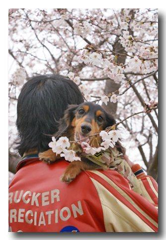 桜を食べる.jpg