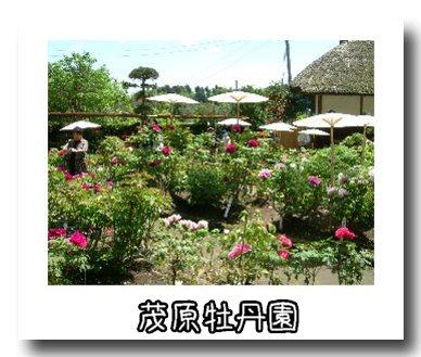 牡丹園.jpg