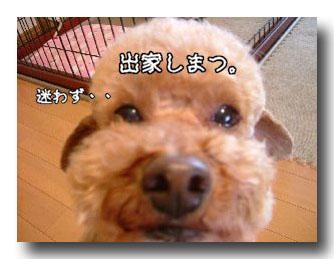 出家のコピー.jpg
