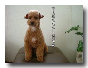 マーズアタックモジャ男