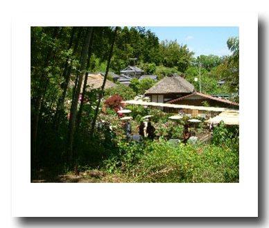 牡丹園�.jpg