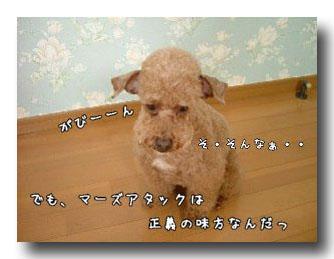 小さな希望のコピー.jpg