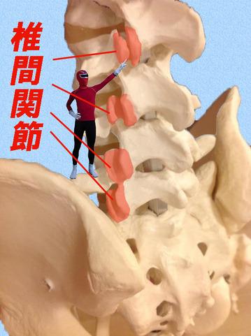 腰椎椎間関節_edited-1