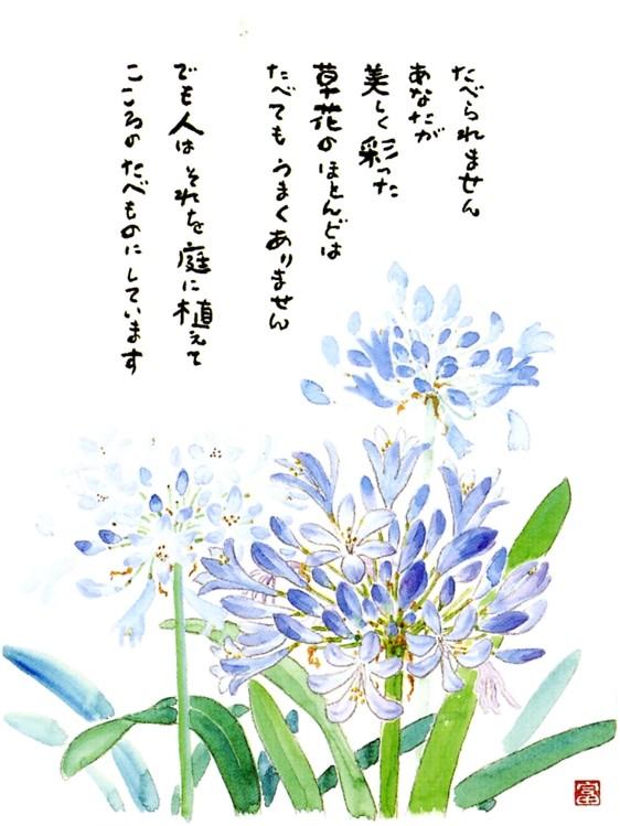 星野富弘の画像 p1_38