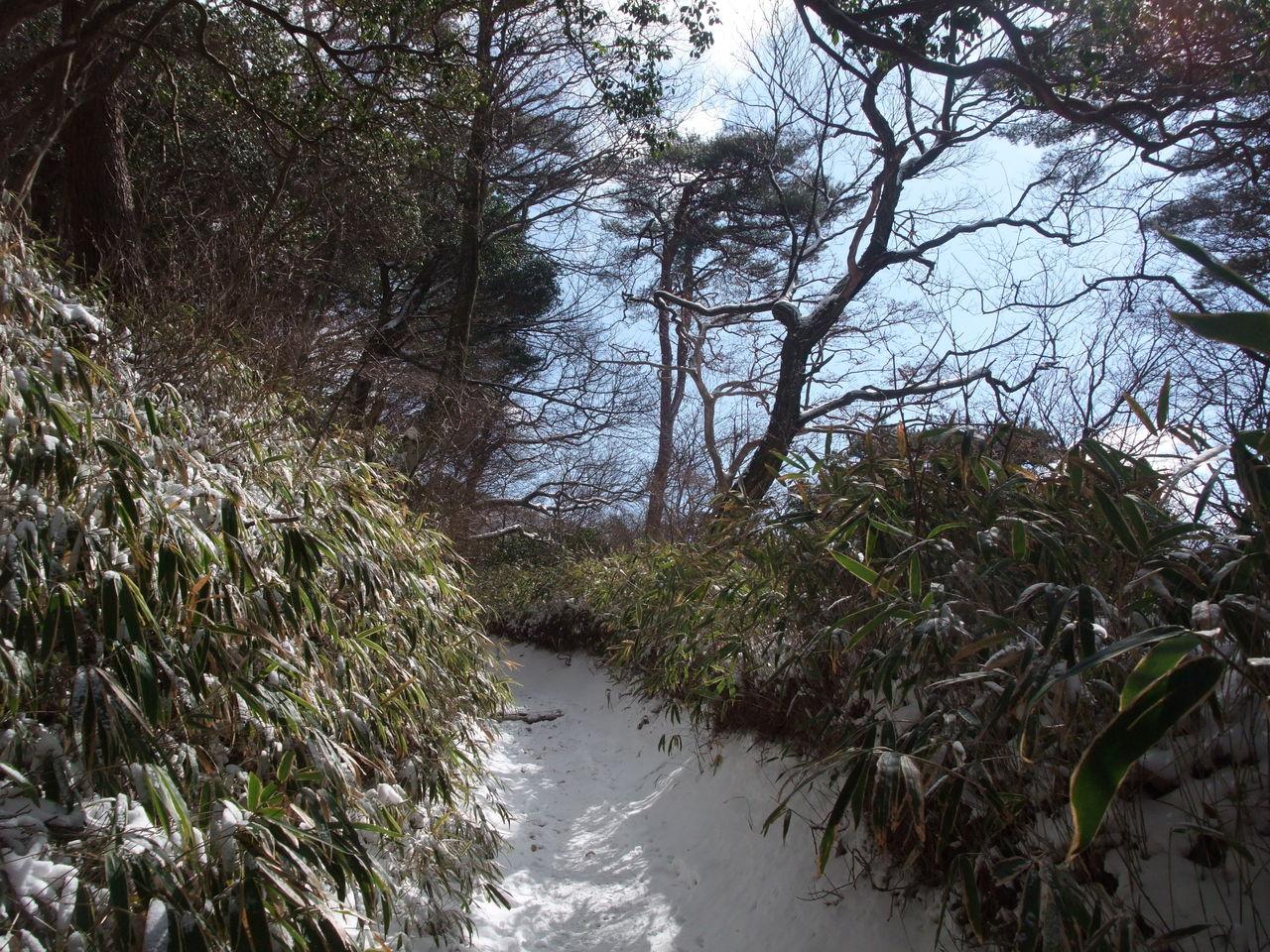 六甲山 魚屋道