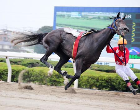 【浦和競馬】的場文男 1着ゴールまであと30センチのところで落馬wwwwwww