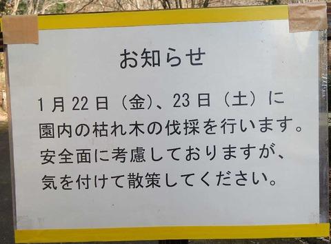2IMG_2974