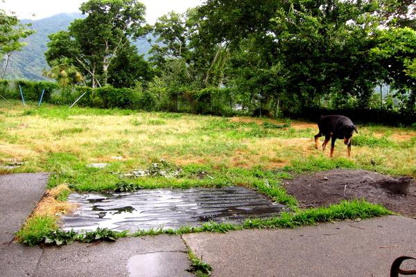 2017年06月07日(水)・・・22.0℃、雨