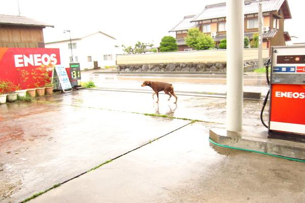 2017年05月13日(土)・・・19.5℃、雨のち曇りのち小雨