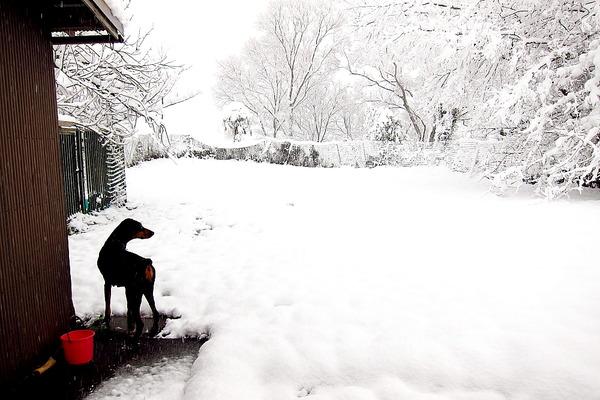 2018年12月30日(日)・・・7.2℃、雪のち曇りのち晴れ