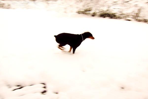 2018年12月29日(土)・・・5.6℃、曇りのち雪