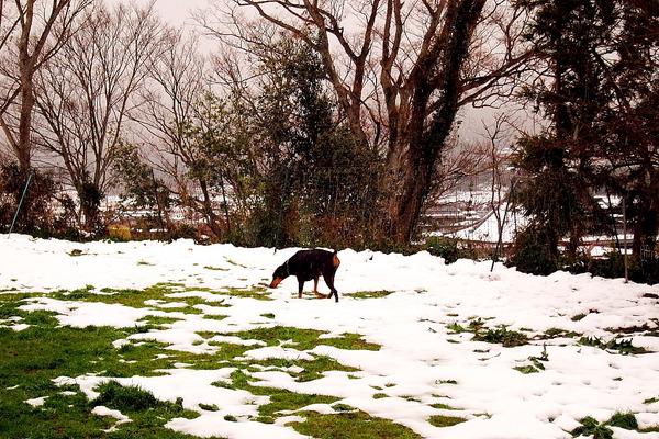2019年01月03日(木)・・・7.7℃、雪のち曇り