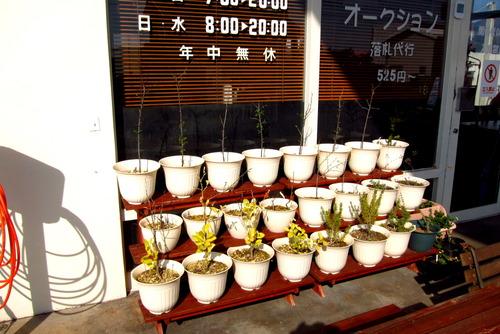 2017年04月04日(火)・・・2012アーモンドの種、0404