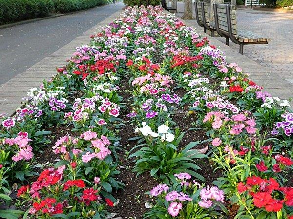 250花壇