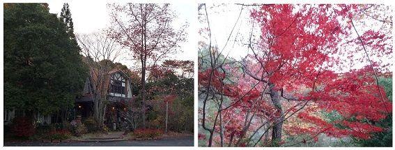 エレガントの秋