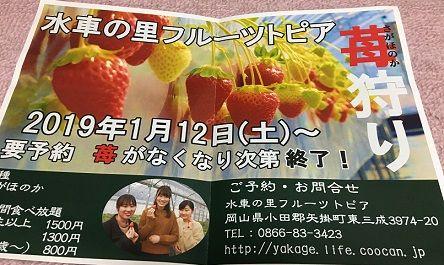 フルーツトピアいちご12