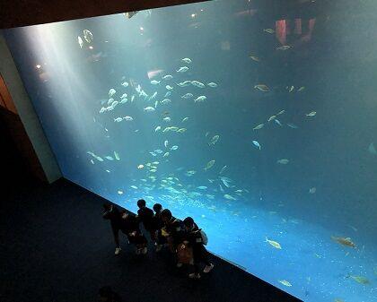 四国水族館10