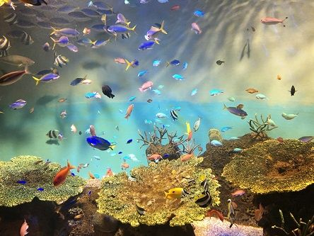 宮島水族館4