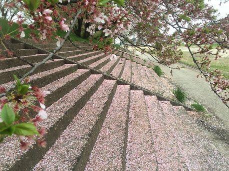 桜の階段ぷ