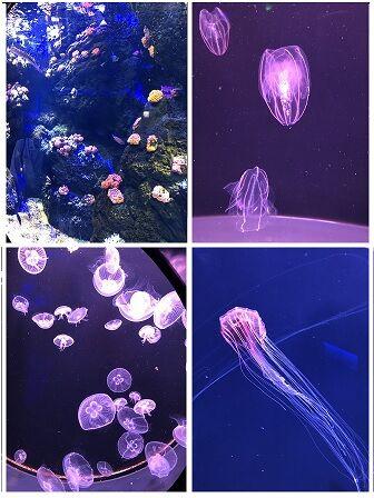 四国水族館9