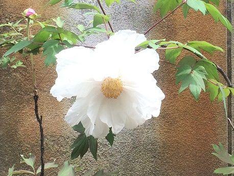 石楠花の郷9