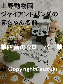 上野動物園ジャイアントパンダの赤ちゃん名前募集 2017年 4