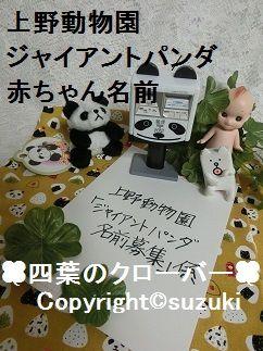 上野動物園ジャイアントパンダの赤ちゃん名前募集 2017年 3