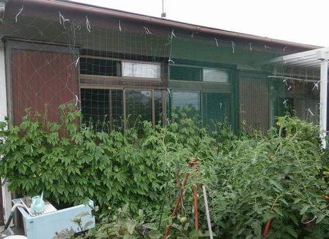 2019-07-14 ゴーヤグリーンカーテン