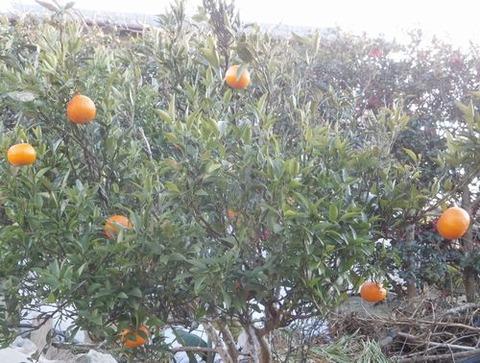 2020-12-20 柑橘 B