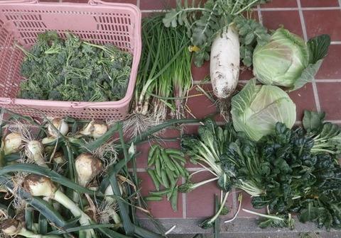 2020-03-15 収穫