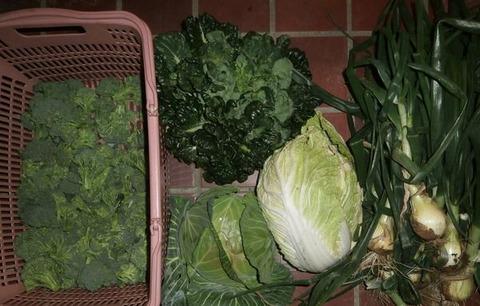 2020-03-01 収穫
