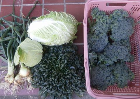 2020-01-05 収穫