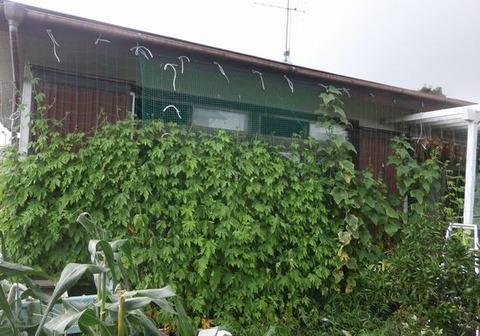 2020-07-26 グリーンカーテン2