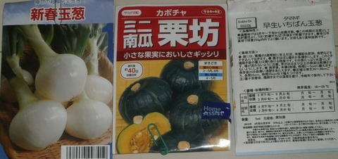 2020-08-16 カボチャ玉葱種