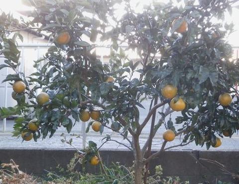 2020-12-20 柑橘 C