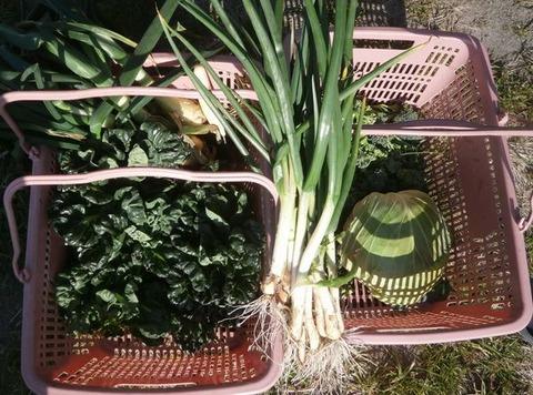 2020-03-08 収穫