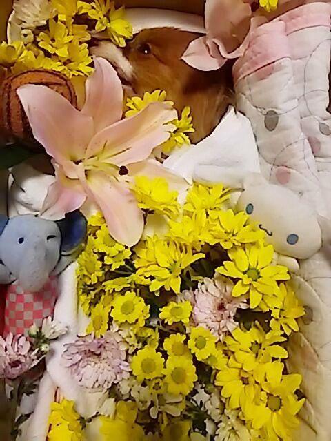 お花ベッドのルーク