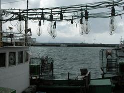 魚港の中のルキア
