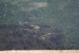 四国八幡浜