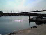 田尻漁港2