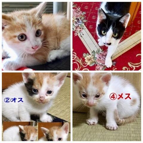 77746EEE-804F-4D46-8886-74AFAC216F74