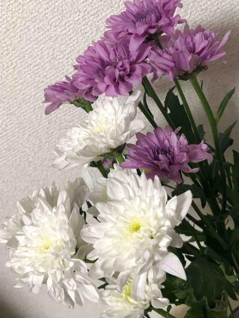 20190520_スプレー菊
