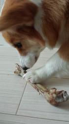 エゾシカの足骨を食す。