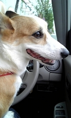 運転席大好き。