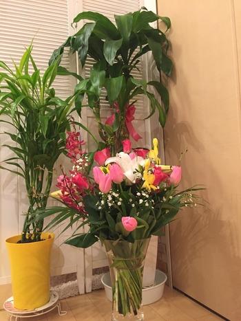 花と観葉植物