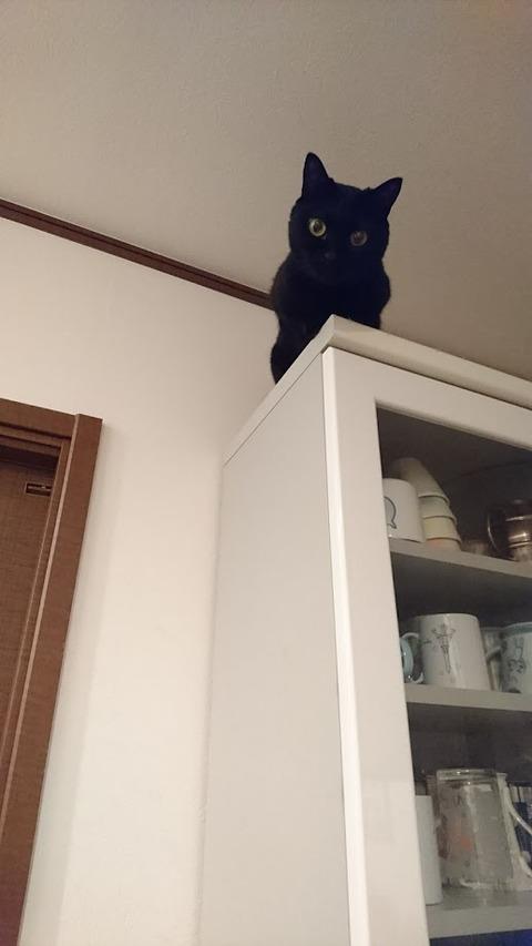 食器棚の上のるな