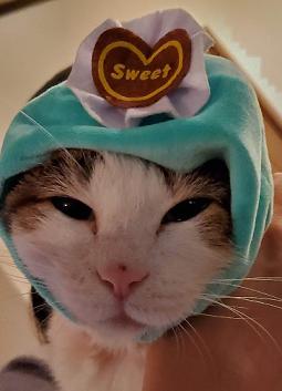 のんちゃんチョコミントケーキ前向き