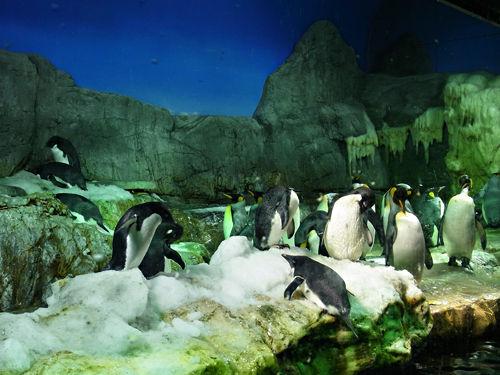 ペンギン群