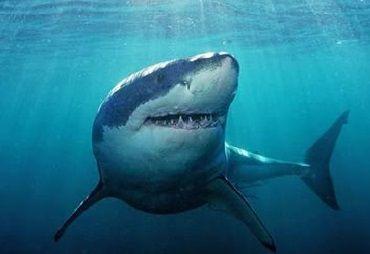 ドラクエってサメのモンスターいないよな